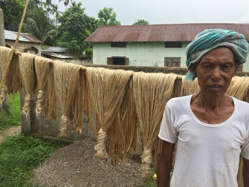 Farmers of Bahitbari, Selsala Block of Meghalaya drying their Jute extract using CRIJAF SONA for retting and other inputs supplied under ICARE Project
