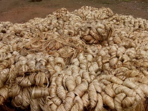 Quality wise bundling of jute after drying