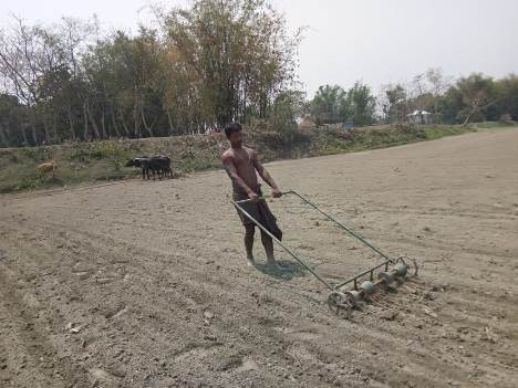Line sowing of jute seed using seed drill machine