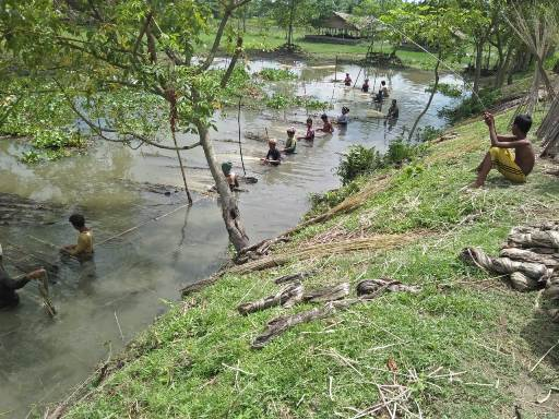 Stripping of retted jute in the water bodies